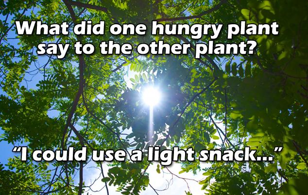 facebook-timeline-tree-light-joke.png